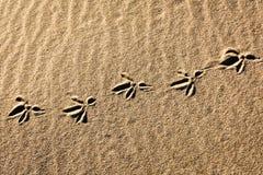 Vogelvoetafdrukken in het strandzand royalty-vrije stock afbeelding