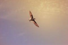 Vogelzeemeeuw die over hemel vliegen stock afbeeldingen