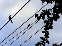 Vogelzeile Lizenzfreie Stockfotos