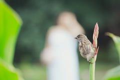 Vogelzitting op de bloemsteel stock afbeelding