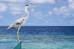 Vogelzitting op de pool Stock Foto's