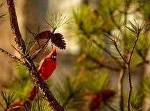 Vogelzitting op de tak Stock Afbeeldingen