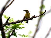 Vogelzitting op een boomtak royalty-vrije stock afbeeldingen