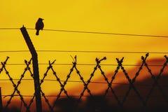 Vogelzitting op een draad met zonsondergang silhoutte Royalty-vrije Stock Fotografie