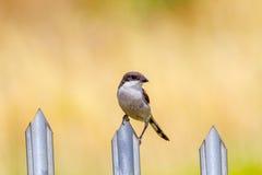 Vogelzitting op een omheining Stock Foto's