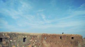 Vogelzitting op muur Stock Foto's