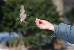 Vogelzufuhr stockbild