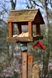 Vogelzufuhr mit Brot lizenzfreie stockfotos