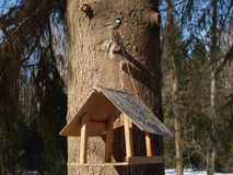 Vogelzufuhr und -Meise auf einem Baum lizenzfreie stockfotografie