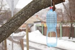 Vogelzufuhr von einer Plastikflasche auf einem Baum im Winter lizenzfreies stockfoto