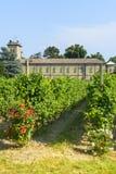 Voghera, виноградник школы vith Стоковая Фотография