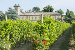Voghera, school vith vineyard. Voghera (Pavia, Lombardy, Italy), school with vineyard at summer Royalty Free Stock Image