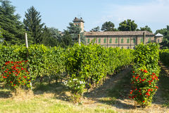 Voghera, school vith vineyard. Voghera (Pavia, Lombardy, Italy), school with vineyard at summer Stock Photography