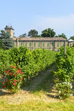 Voghera, school vith vineyard. Voghera (Pavia, Lombardy, Italy), school with vineyard at summer stock photography