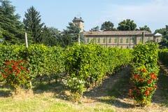 Voghera vingård för skola vith Arkivbild