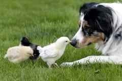 Voglia essere amici? Fotografia Stock Libera da Diritti