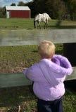 Voglio un daddy del cavallino! Immagine Stock