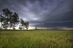 Voici venir la pluie Photos libres de droits