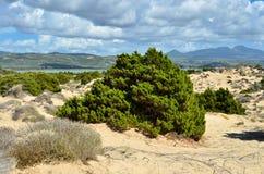 Voidokilia, paysage de Messenia, Grèce photographie stock libre de droits