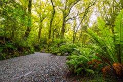 Voie à l'automne d'abîme, parc national de Fiordland, Milford Sound, Nouvelle-Zélande image libre de droits