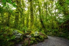 Voie à l'automne d'abîme, parc national de Fiordland, Milford Sound, Nouvelle-Zélande photo libre de droits