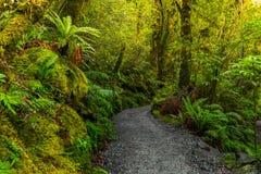 Voie à l'automne d'abîme, parc national de Fiordland, Milford Sound, Nouvelle-Zélande images libres de droits