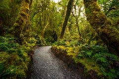 Voie à l'automne d'abîme, parc national de Fiordland, Milford Sound, Nouvelle-Zélande photos stock