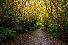 Voie à l'automne d'abîme, parc national de Fiordland, Milford Sound, Nouvelle-Zélande images stock
