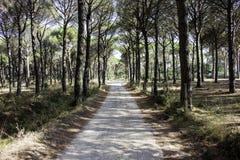 Voie à travers une forêt méditerranéenne photo libre de droits