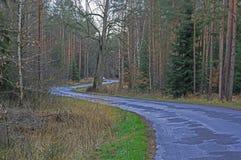 Voie étroite par la forêt conifére Images libres de droits