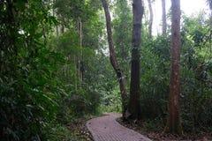Voie au milieu de jungle photo libre de droits