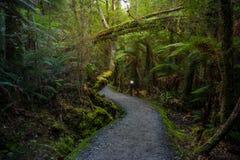 Voie autour de lac Matheson, Nouvelle-Zélande images libres de droits