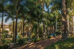 Voie avec le pavé rond parmi un jardin luxuriant complètement des arbres grands et des palmiers, dans un jour ensoleillé chez Sã photo libre de droits