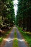 Voie d'accès de forêt de saleté images libres de droits