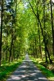 Voie d'accès pavée de forêt images stock