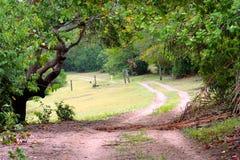 Voie d'arbres Photos libres de droits