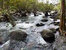 Voie d'eau dans la forêt Photographie stock libre de droits