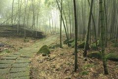 Voie d'escaliers dans les forêts en bambou image stock