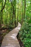 Voie dans la forêt photographie stock libre de droits