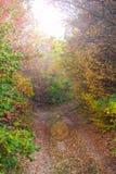 Voie dans la forêt Photographie stock