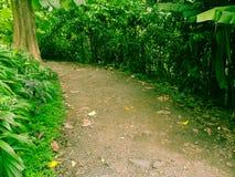 Voie dans la forêt Image libre de droits