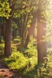 Voie dans la forêt images stock
