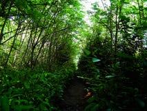 Voie dans la forêt Images libres de droits