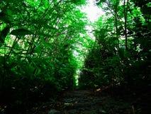 Voie dans la forêt Image stock