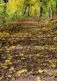 Voie dans la forêt avec des lames en automne Photos stock