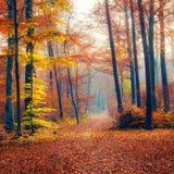 Voie dans la forêt brumeuse d'automne photographie stock libre de droits