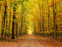 Voie dans la forêt d'automne photo stock
