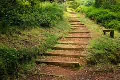 Voie dans la forêt Irlande d'Avondale Photo stock