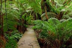 Voie dans la forêt tropicale Photo libre de droits