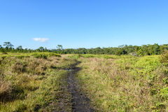 Voie dans la forêt verte Images stock